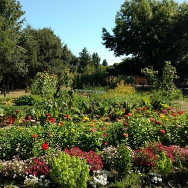 Beauty of integrated pest management in market vegetable garden