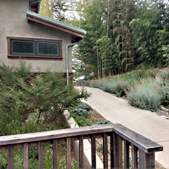 Native Plantings around Guest Housing at Ecovillage