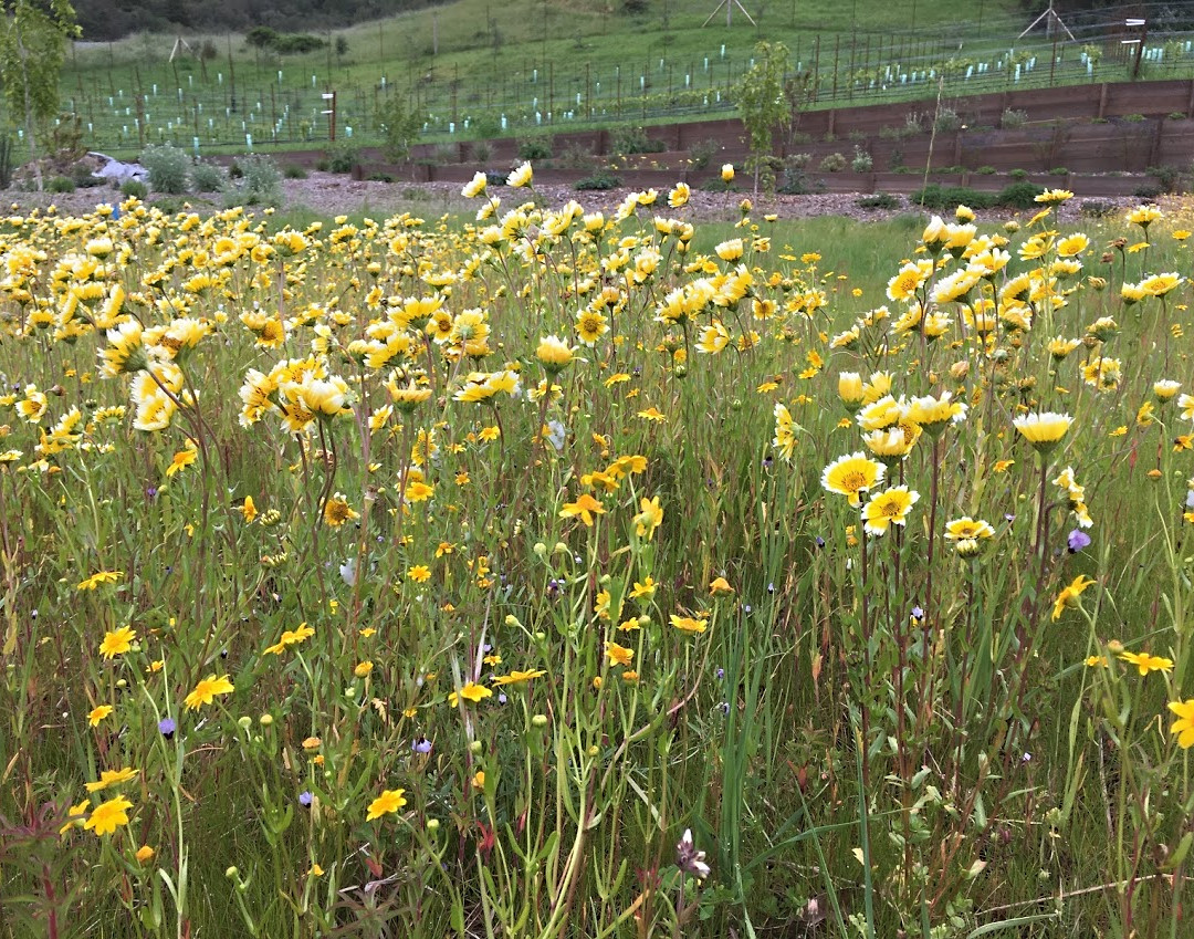 14 meadow in flower.JPG
