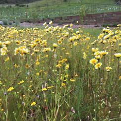 14 meadow in flower.JPG