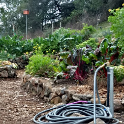 Stone Keyhole Garden with Owl Box to manage gophers