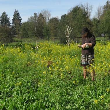 Field assessment during soil restoration