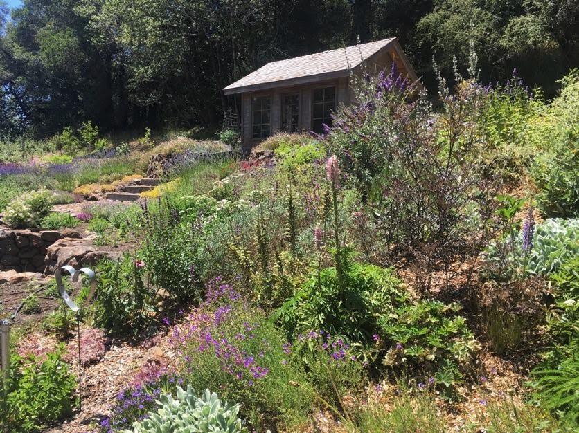 Drought-tolerant & aromatic pollinator garden
