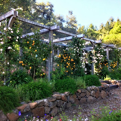 Citrus & Rose Arbor over Outdoor Dining Space with Chandelier