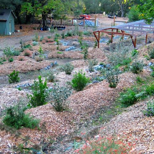 Biodiversity Orchard & Pond System to optimize Microclimates