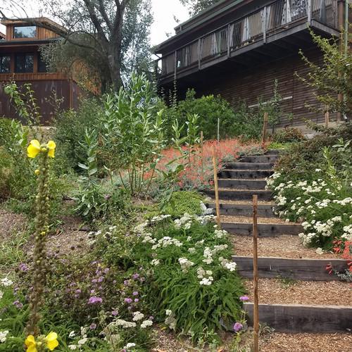 Evovillage native plantings along public walkway