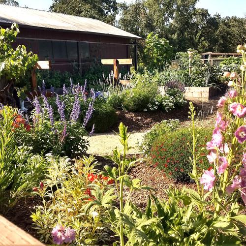 Perennial keyhole garden