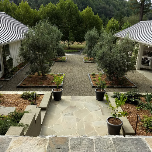 Formal courtyard with olive trees, aromatics & espalier apple tree