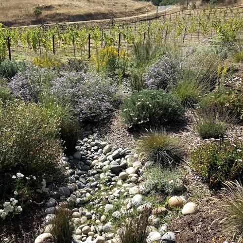 Serpentine rain garden