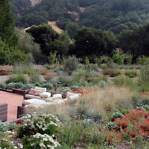 Poolside Native Plantings with Mixed Fruit Orchard in background
