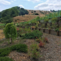 Vineyard terraces.jpeg