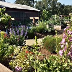 Perennial Keyhole Garden.jpeg