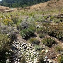 09 serpentine rain garden planting 2.jpg