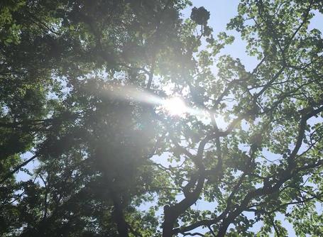 初夏の光にさようなら