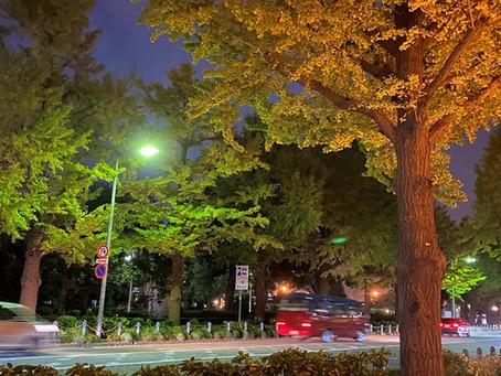 木(こ)の葉のごとく