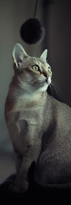 animaux-3811.jpg