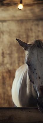 animaux-4.jpg