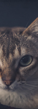 animaux-8663.jpg