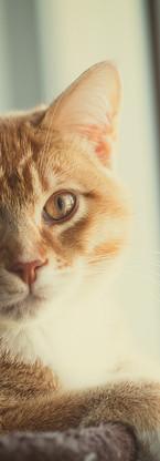 animaux-3806.jpg