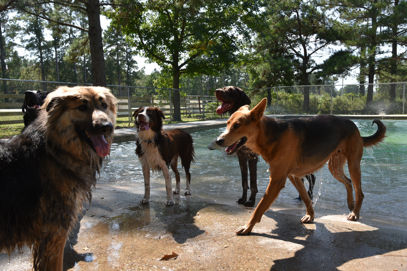 The Barkly Dog Daycare: Dogs Learn to Socialize and Play!