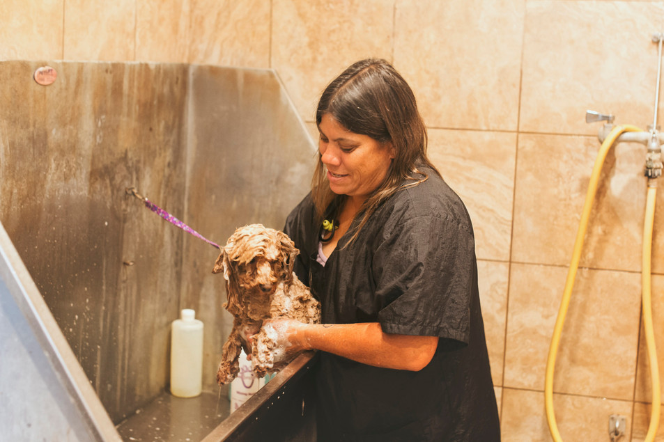 The Barkly Pet Retreat & Spa: Boarding, Grooming, Daycare, and Training Services for Dogs & Cats: