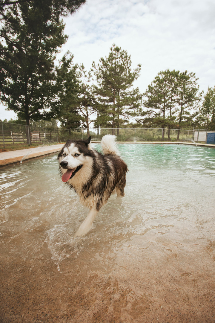 The Barkly Dog Daycare: Your Pets Will Love Our Splash Camp!