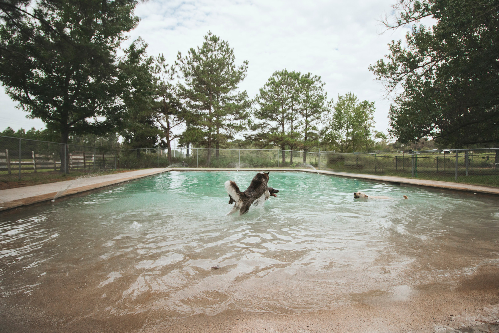 The Barkly Dog Daycare: Dogs Enjoy a 30,000 Gallon Pool!