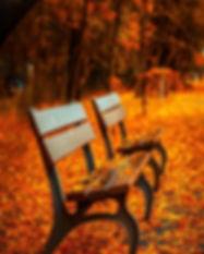bench-560435.jpg