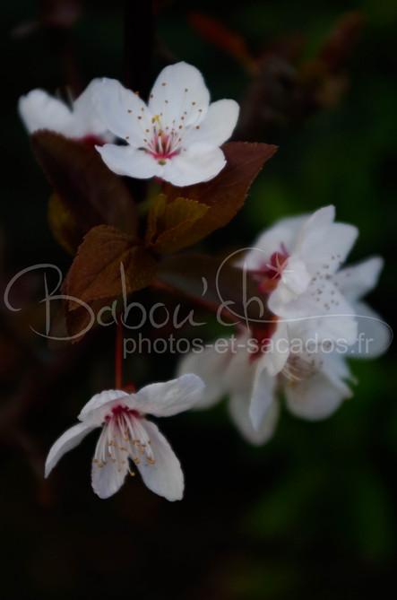 fleurs hiversales, eaubonne, france.jpg