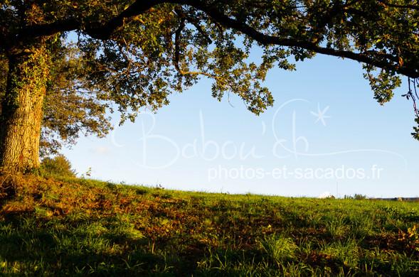 Jolies couleurs d'automne, Limousin,Fran