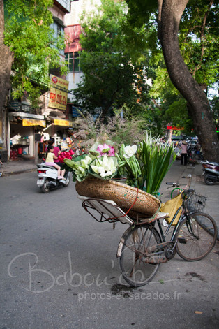 Vélo_fleuris,_Hanoi,_Vietnam_.jpg