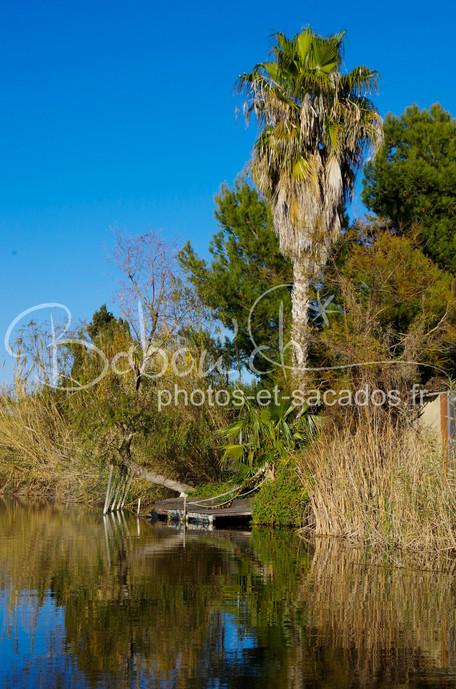 Végétation,_Parc_naturel_d'Albufera,_E