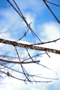 Branches_enneigées.jpg