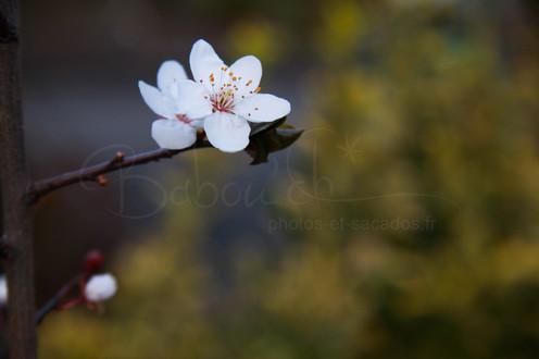 fleurs printanieres.jpg