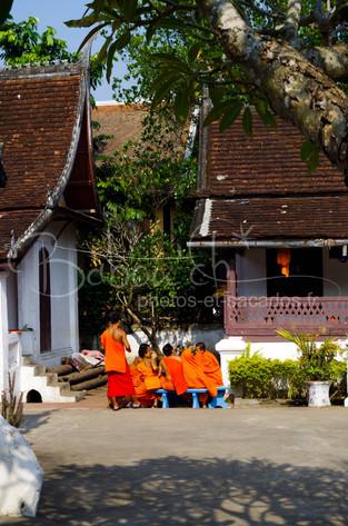 Jeunes moines novices, Luang Prabang, La
