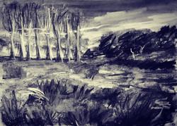 the poplars II