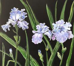 Irises SOLD