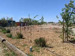 Plantings on border of new site and parking lot