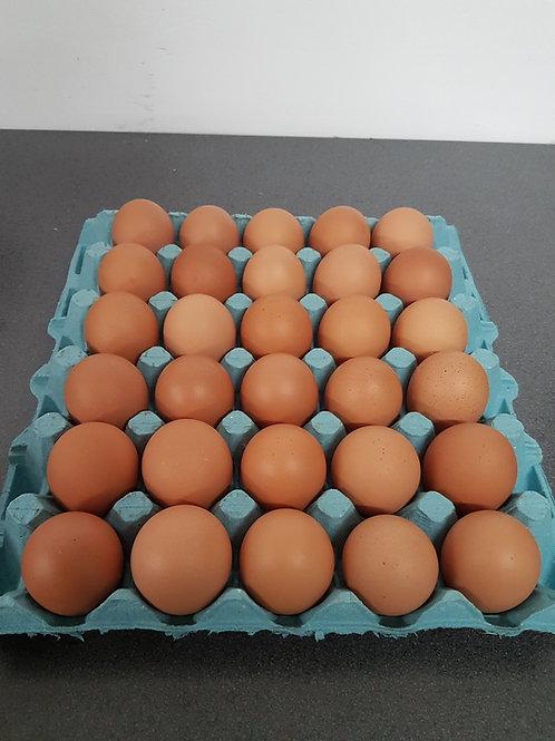 Medium Free Range Eggs