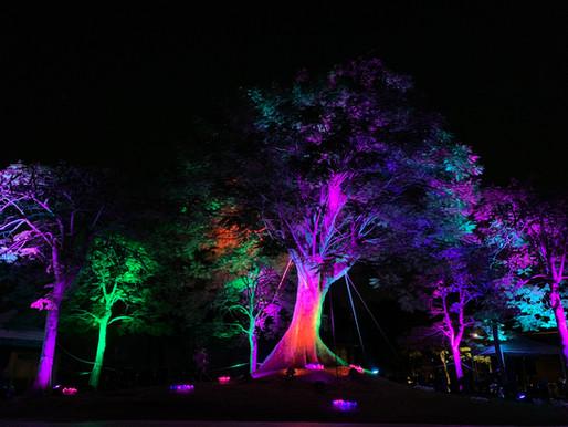 絢麗燈光藝術燈節 走春不能錯過「亮」點