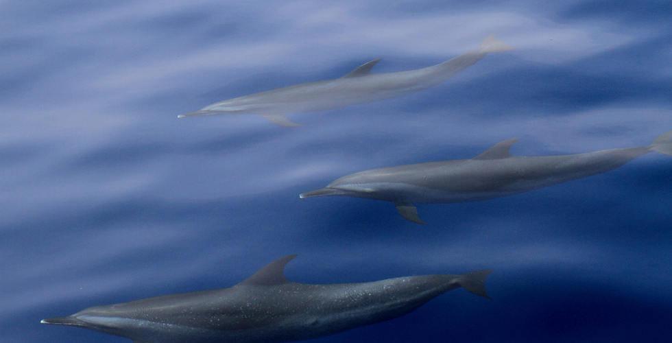 世界地球日50年 Canon響應海保監測 舉辦尋找拍下白海豚瀕絕身影 參與愛地球