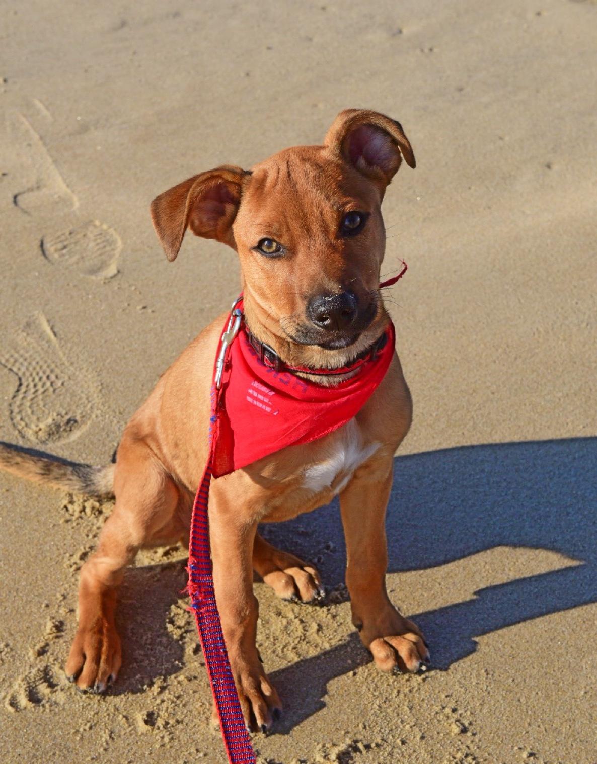 Dietz loves the beach!