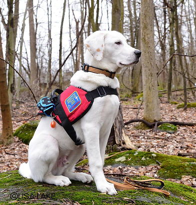 Tails of Valor, Paws of Honor Inc