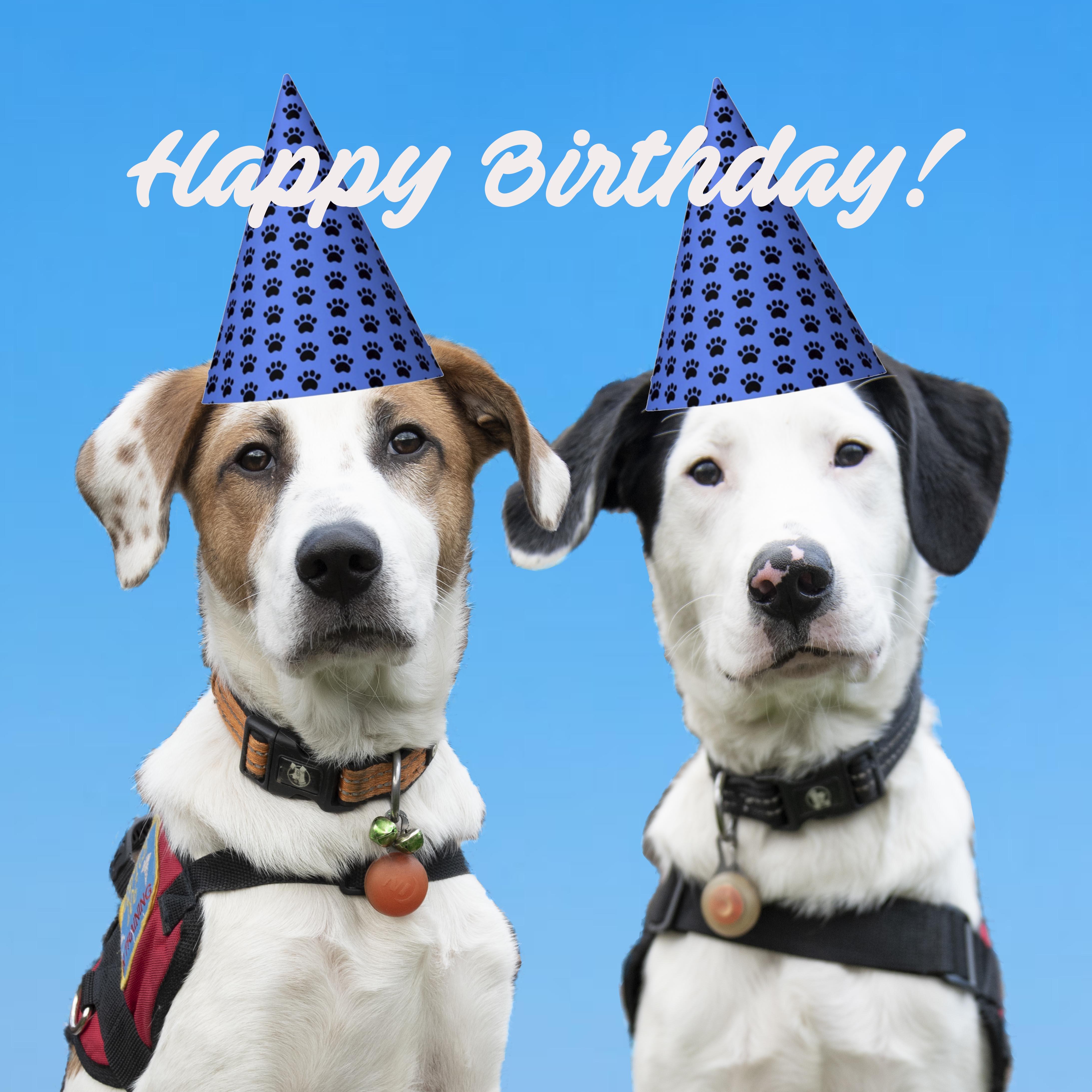 Celebrating our 1st Birthday!