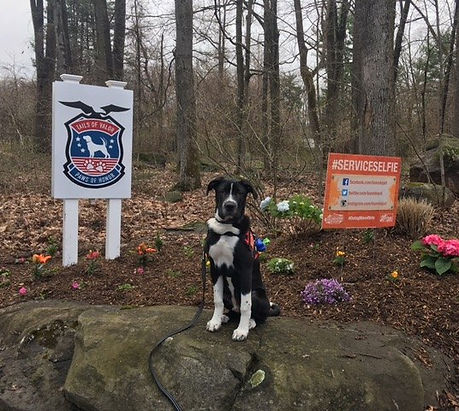 Tails of Valor, Paws of Honor Inc.