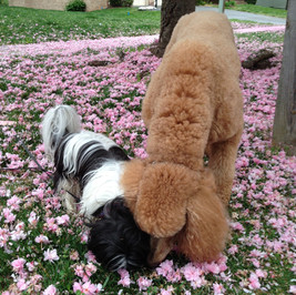 Melitta Carter's dogs