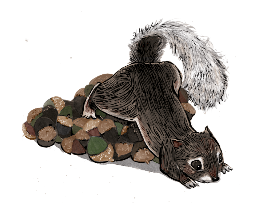 squirrel_mounds_acorns