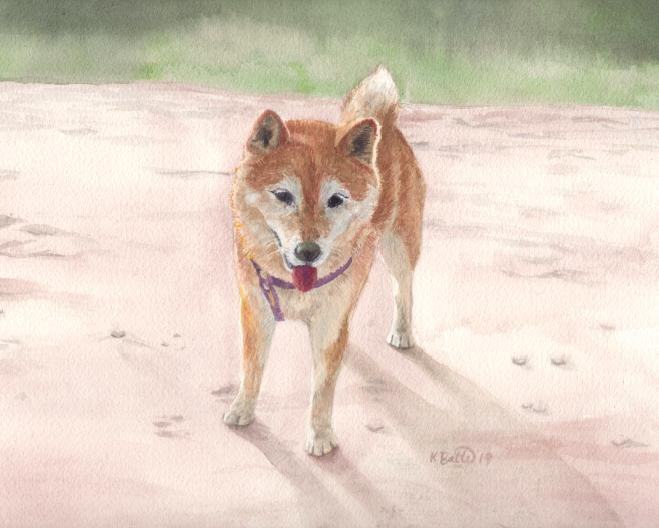 pet_portrait_shiba_inu