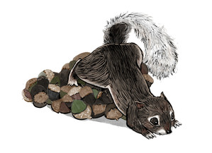 Squirrel on a pile of treats