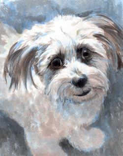 Gracie Portrait